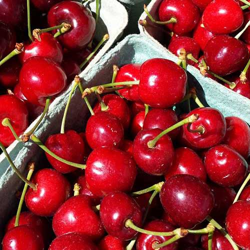Cherries at Burnaby Farmer Market