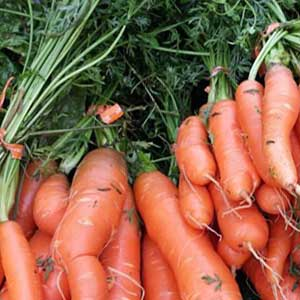 Carrots at Lonsdale Farmers Market