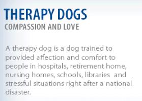 St. John Ambulance's Therapy Dogs