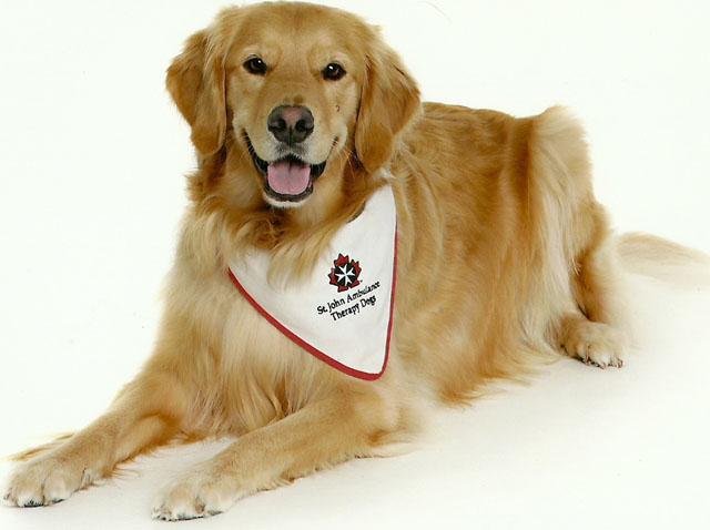 St. John Ambulance's Therapy Dog 3
